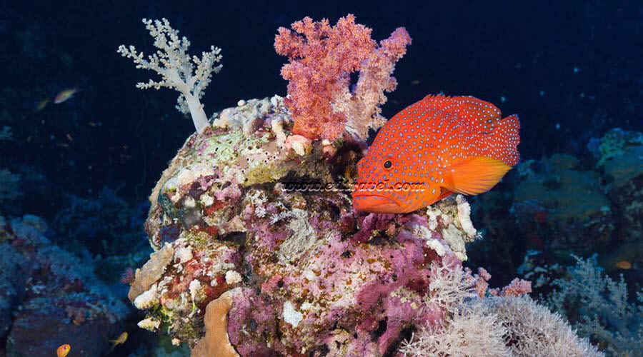 St Johns Reef Marsa Alam