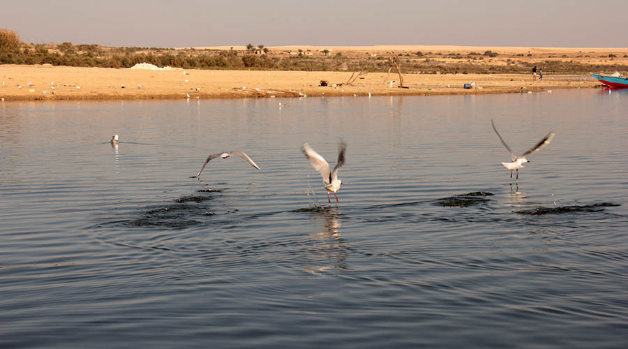 Qarun Lake Fayoum Egypt