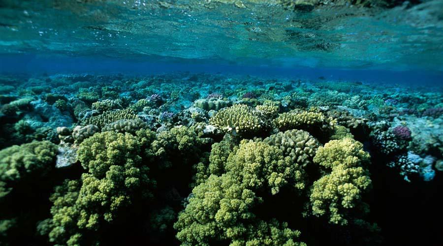 Sataya Reef Marsa Alam