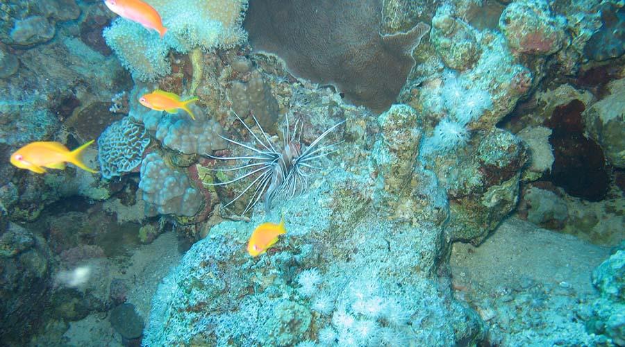 Lighthouse Reef Dahab