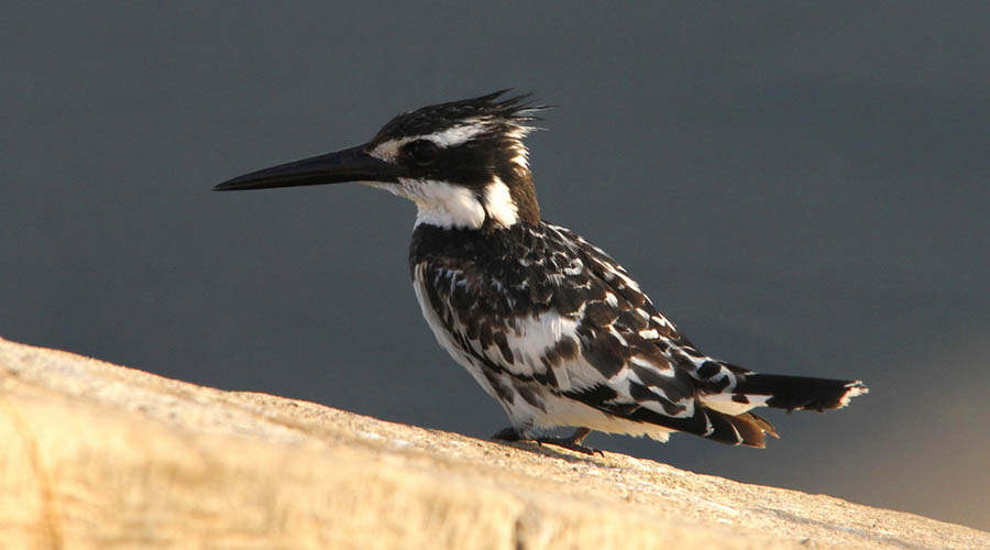 Luxor Bird Watching Egypt