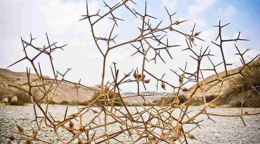 Egypt Nature Exploration