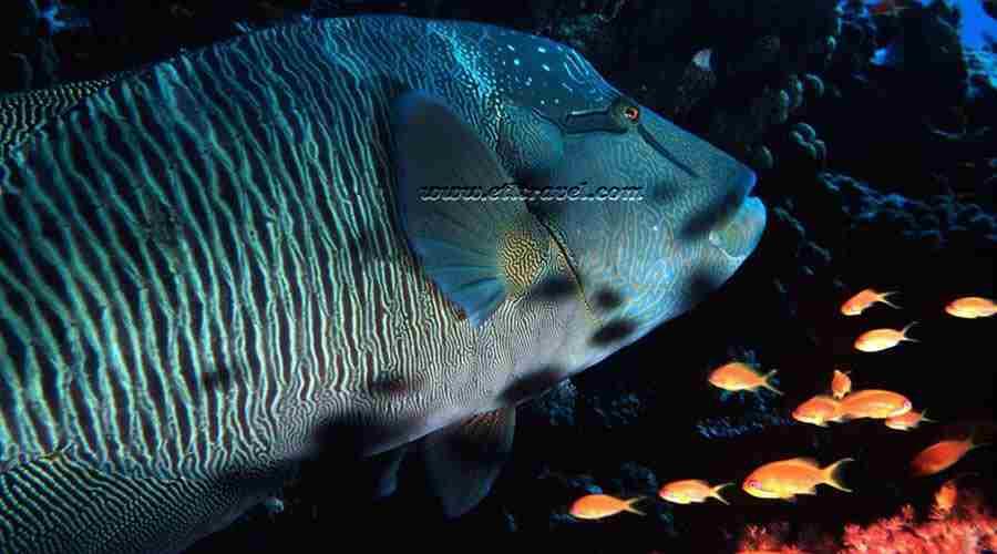 Elphinstone Reef Marsa Alam