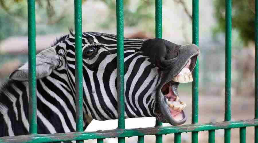 Giza Zoo Cairo Egypt