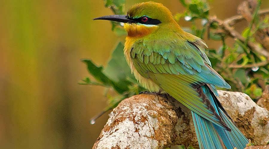 Cairo Bird Watching Egypt