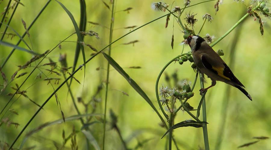 Fayoum Bird Watching