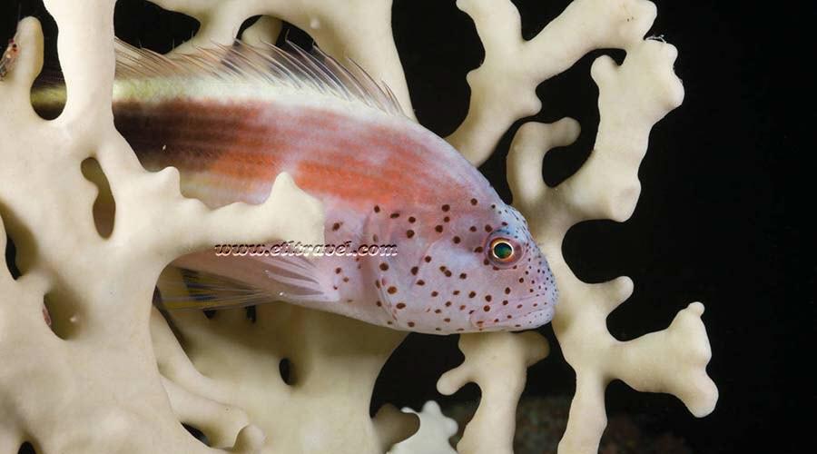 Daedalus Reef Marsa Alam