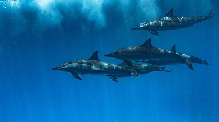 Dolphin House Reef El Gouna