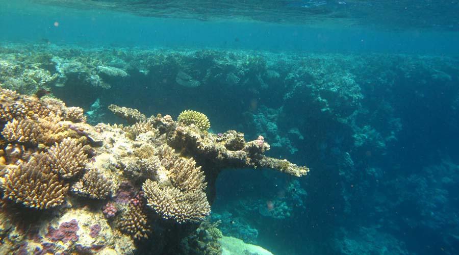 Abu Kafan Reef Safaga