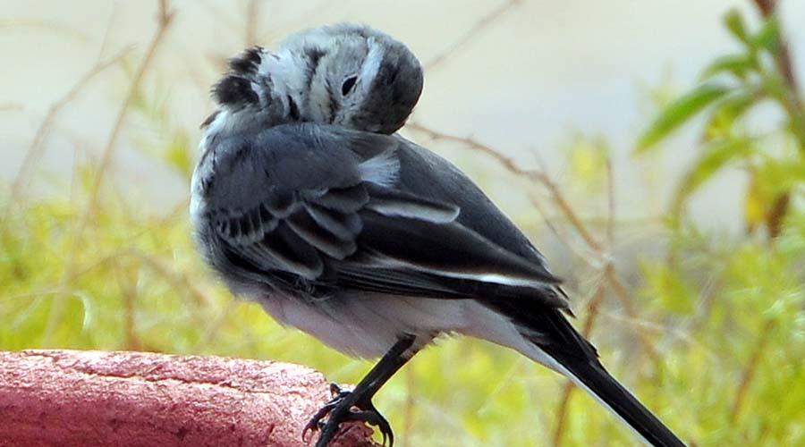 Ain Sokhna Birds Watching