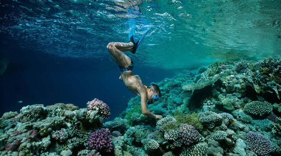 Ain Sokhna Snorkeling