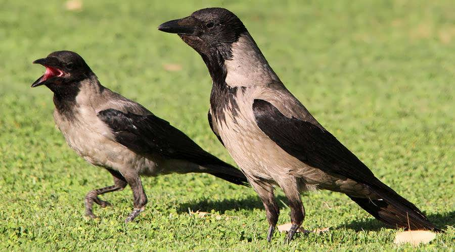 Egypt Bird Watching