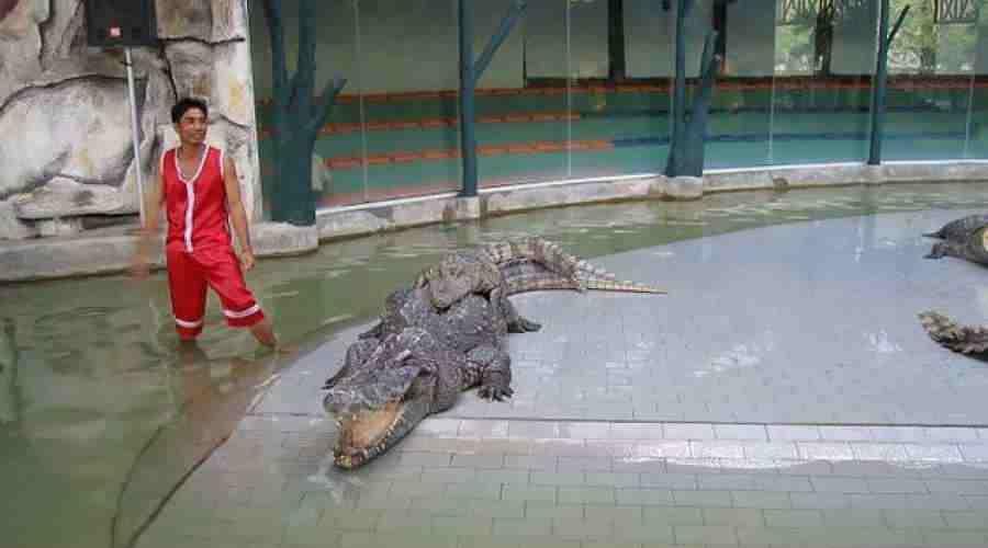 Sharm Crocodiles Snakes Show