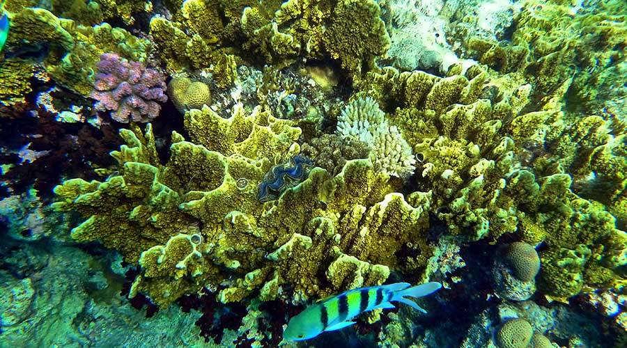 Sharm diving tour