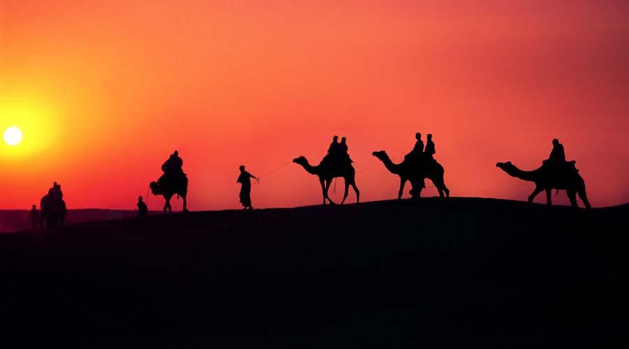 Sunset Camel Ride Dakhla