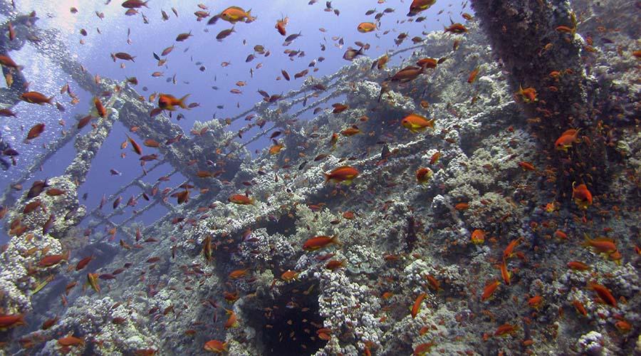 Egypt Wreck diving