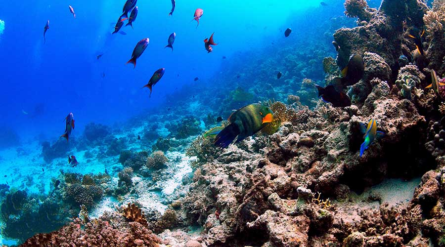 Shaab El Fanadir Hurghada