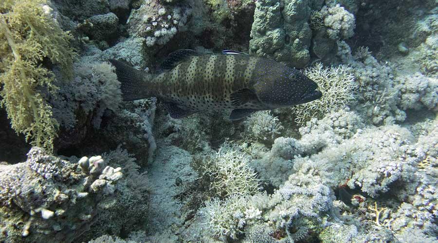 Ras Muhammad Diving site