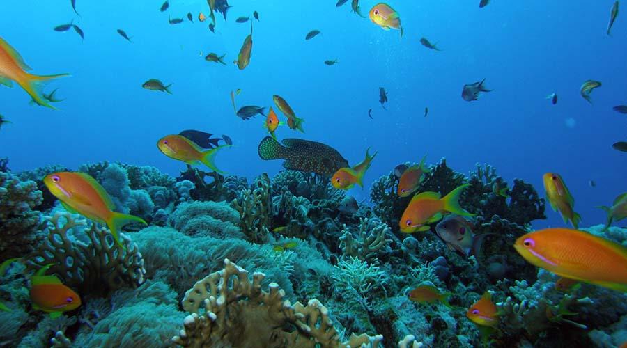 Shark and Yolanda Reefs