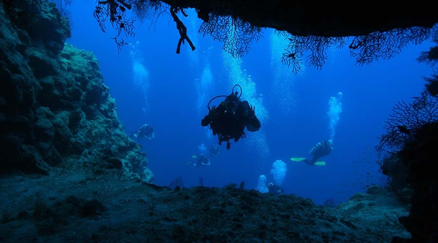 Shark Observatory Sharm
